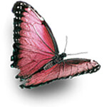 red_butterfly